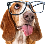 All Pet Solutions Help and Advice